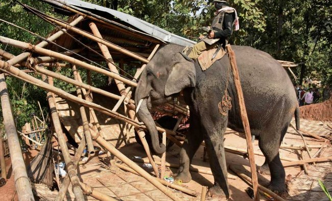 A Forest department elephant demolishing illegal structures during an anti-encroachment drive...