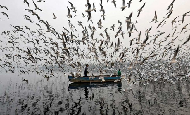 Men feed seagulls along the Yamuna river on a smoggy morning in New Delhi, India...