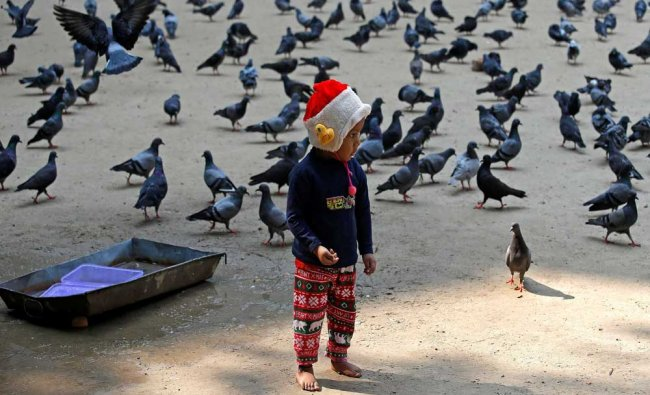 A boy feeds pigeons on a cold winter morning in Kolkata, India...