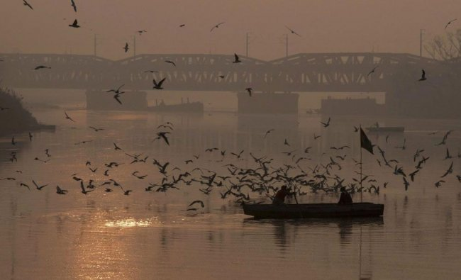 A boatmen rows across the Yamuna river as a flock of seagulls fly over in Delhi on Tuesday.