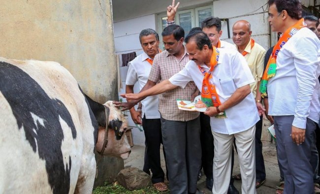 Union Minister and BJP leader Sadananda Gowda seeks blessings of cow as he campaigns for the party candidate Aswathnarayan (R) ahead of Karnataka assembly elections, in Malleswaram area in Bengaluru on Wednesday. PTI Photo