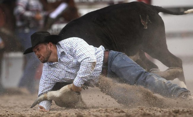 Brett Gumb, of Burwell, Neb., competes in steer wrestling during the Cheyenne Frontier Days Rodeo on Tuesday in Cheyenne, Wyoming. (AP/PTI Photo)