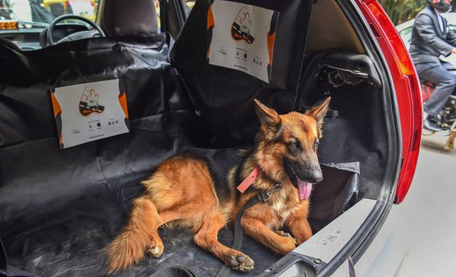Bengaluru: A dog sits inside a \'Paw-cab\', specially designated for the pets and animals, during a press conference in Bengaluru, Wednesday, Sept 26, 2018. (PTI Photo/Shailendra Bhojak)