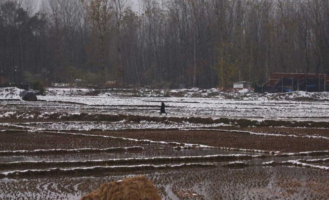 A man walks in a paddy field partially covered with snow on a cold day in Srinagar November 5, 2018. REUTERS