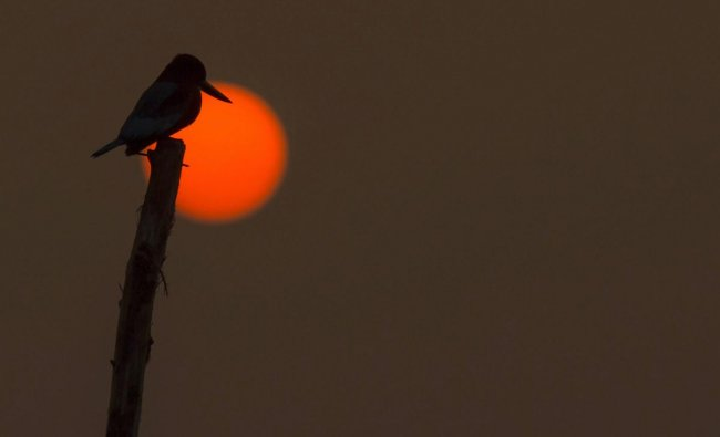 Silhouette of a kingfisher bird as it rests in the backdrop of a setting sun over Dal Lake, in Srinagar, Friday, Nov. 30, 2018. (PTI Photo/S Irfan)