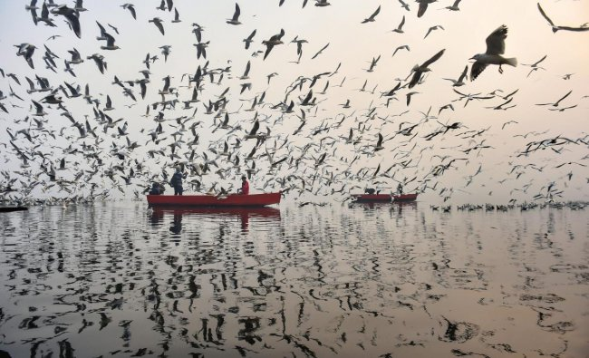 A flock of migratory gulls during the first sunrise of the New Year 2019, as seen from Yamuna Bazar, in New Delhi. PTI