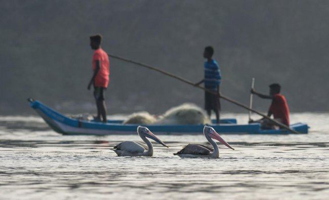 Pelicans seen in the foreground as fishermen collect their fishing nets after day end\'s work, at Foreshore Estate beach (Pattinapakkam beach), in Chennai. (PTI Photo/R Senthil Kumar)