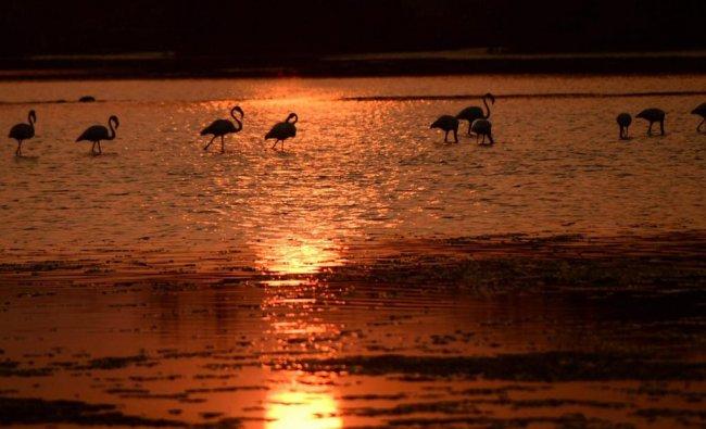 Flamingoes at Talawle Pond near Nerul on World Wetlands Day, in Navi Mumbai, Saturday, Feb 2, 2019. (PTI Photo)