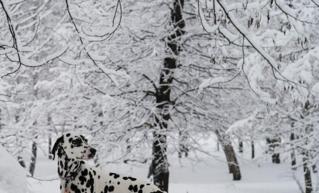 A dog is seen in a snow covered park during snowfall in Kiev, Ukraine February 6, 2019. REUTERS/Gleb Garanich