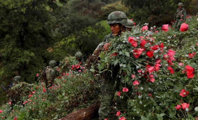 Soldiers cut opium poppies as they destroy a field of illegal plantation in the Sierra Madre del Sur, in the southern state of Guerrero, Mexico, August 25, 2018. REUTERS/Carlos Jasso