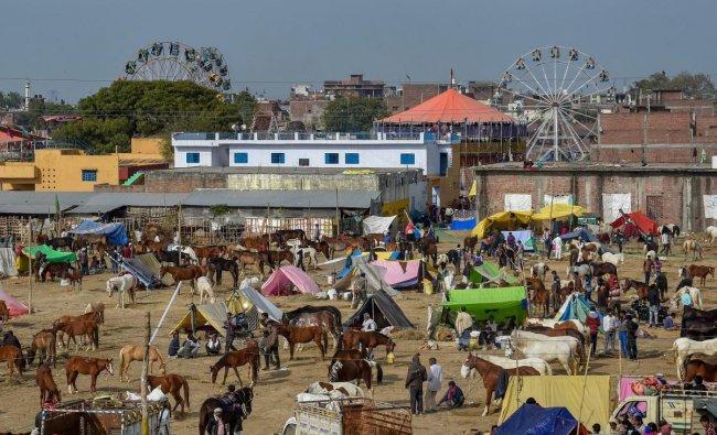 Horses seen at a fair near Kanpur, Sunday, Feb. 10, 2019. (PTI Photo)