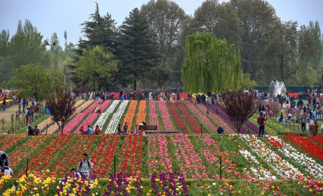 Srinagar: A view of the Tulip flowers in full bloom at Asia\'s largest tulip garden on the foothills of Zabarwan range overlooking world famous Dal Lake, in Srinagar, Friday, April 12, 2019. PTI