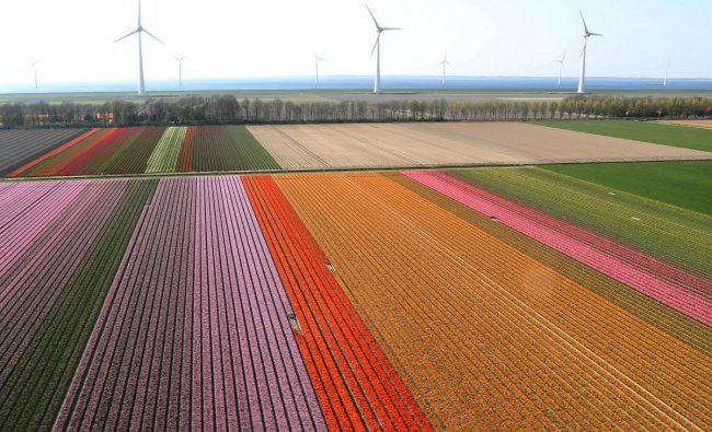 An aerial view of tulip fields near the city of Creil, Netherlands April 18, 2019. Picture taken April 18, 2019. REUTERS/Yves Herman?