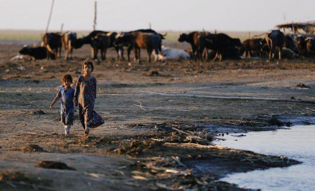 Iraqi Marsh Arab girls walk near buffaloes at the Chebayesh marsh in Dhi Qar province, Iraq April 13, 2019. Picture taken April 13, 2019. REUTERS/Thaier al-Sudani