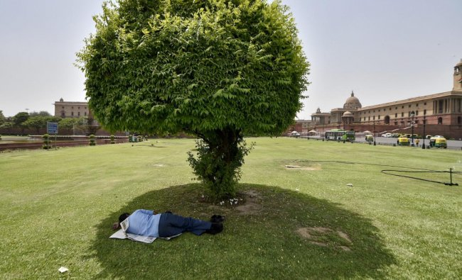 A man sleeps under the shade of a tree on a hot summer day at Vijay Chowk, in New Delhi. (PTI Photo)