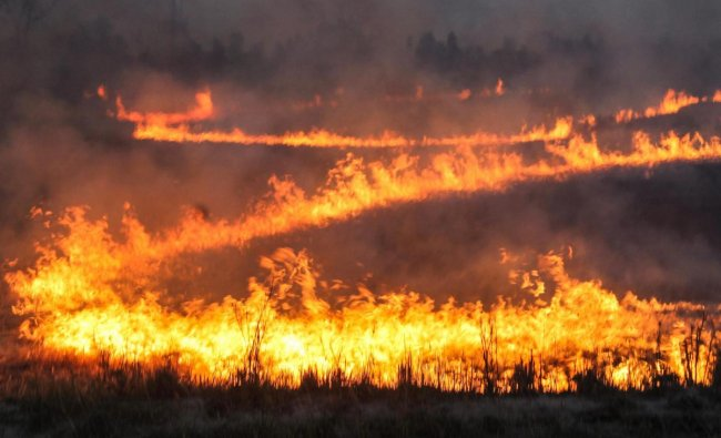 Villagers burn wheat stubbles in a field in Sangrur. (PTI Photo)