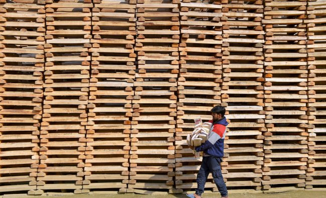 A worker walks past willow clefts which are used for manufacturing of cricket bats, in a factory in Anantnag district of south Kashmir, Sunday, June 9, 2019. Kashmiri bat manufacturers, second leading exporters of the willow cricket bats after the UK, are experiencing a boom in sales due to ongoing Cricket World Cup. Kashmiri willow bats cost very less as compared UK manufactured bats and surprisingly around ten percent of these products are exported to several countries including UK. (PTI Photo/S Irfan)