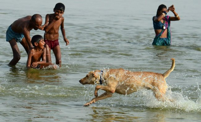 Indian Hindu devotees takes a dip while a dog runs past at Sangam, the confluence of the rivers Ganges and Yamuna and mythical Saraswati, during a hot day in Allahabad on June 11, 2019. (Photo by SANJAY KANOJIA / AFP)