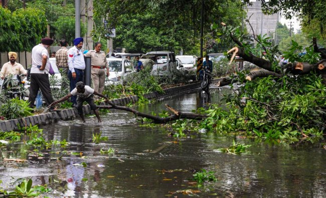 Workers cut branches of an uprooted tree that fell on the road after a storm, in Amritsar, Thursday, June 20, 2019. PTI