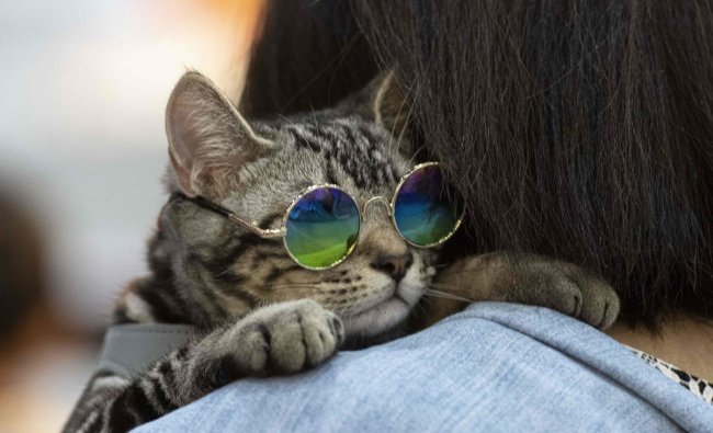 A cat wering glasses leans on the shoulder of its owner at the \