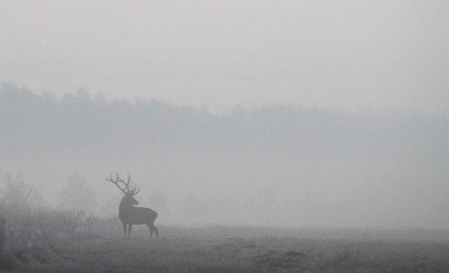 A male deer is seen in a field in Republican landscape reserve Nalibokski near the village of Kozliki, Belaru. (Reuters Photo)
