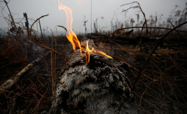 A tract of Amazon jungle is seen after a fire in Boca do Acre, Amazonas state, Brazil on August 24, 2019. (REUTERS/Bruno Kelly)