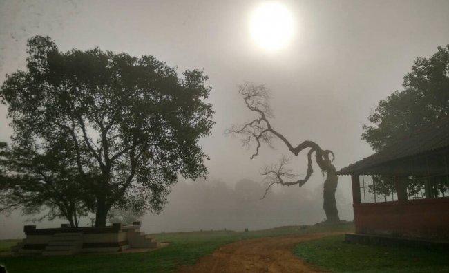 Clicked at Madikeri by Dr Sujatha Manjesh