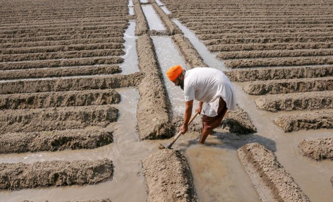 A farmer irrigates his potato field in a village on the outskirts of Amritsar. (PTI photo)