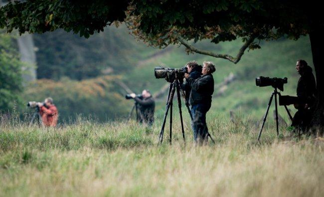 Photographers take pictures as red deer stags roar in Dyrehaven in Klampenborg, north of Copenhagen, Denmark September 26, 2019. Ritzau Scanpix/Niels Christian Vilmann via REUTERS