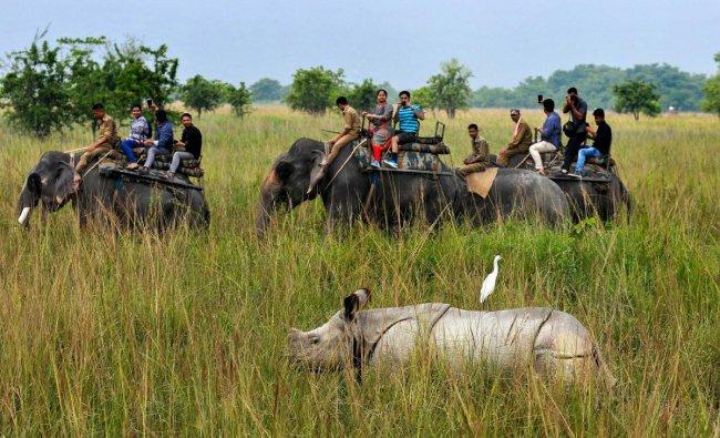 Tourists ride elephants to a watch Indian one-horn rhinoceroses at Pobitora wildlife Sanctuary, some 55 kilometres east of Guwahati on Sunday. (PTI Photo)