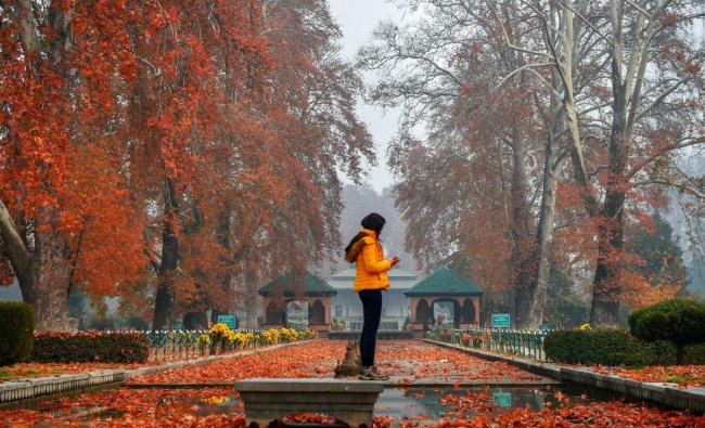 A woman takes pictures of the Chinar leaves at the Mughal Garden, during autumn in Srinagar. PTI photo