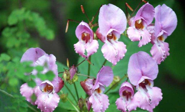 Flower Power. Photo by Ramakrishna Upadhya