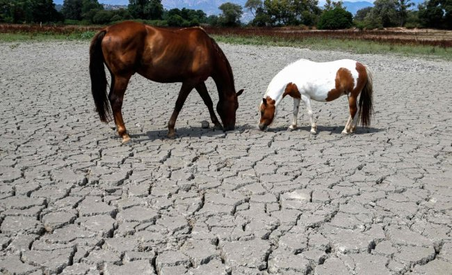 Horses looking for grass to graze in a dry land near Bastelicaccia on the French Mediterranean island of Corsica (AFP Photo)
