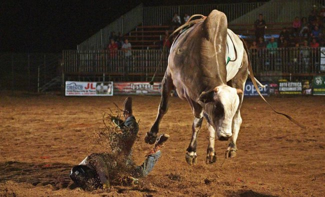 A rider falls during a rodeo event in Monte Negro, south of the Amazon basin, Rondonia state, Brazil (AFP Photo)