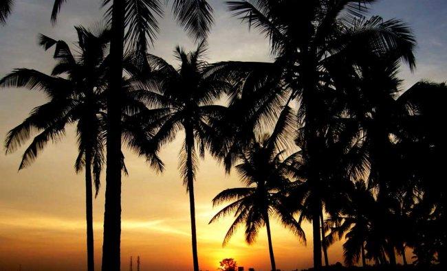 Sunset at GKVK Campus, Bengaluru. Clicked by Sharath Ahuja