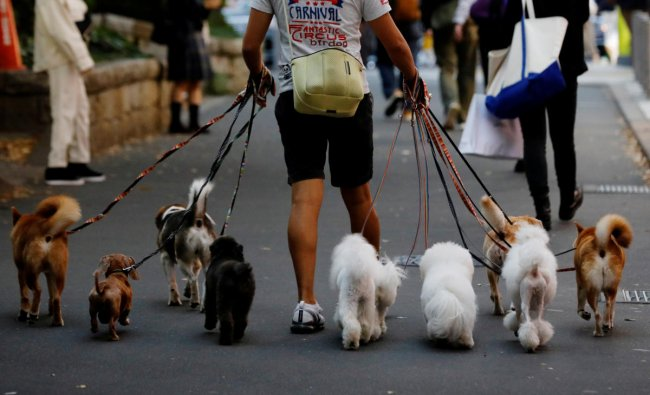 Dog walker Nobuaki Moribe takes a walk with dogs in Tokyo, Japan. Credit: Reuters Photo