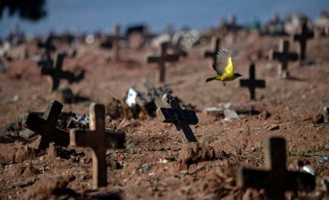 A bird flies among crosses at the Sao Franciso Xavier Cemetery in Rio de Janeiro, Brazil. Credit: AFP Photo