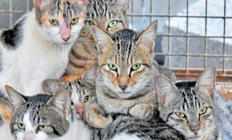 Indian Cat Species Get Their Own Names Deccan Herald
