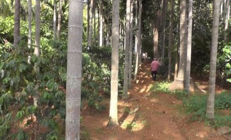 Coffee estate in bustling Bengaluru - yes, it exists!