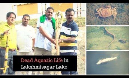 Dead aquatic life floats on Lakshmisagar Lake
