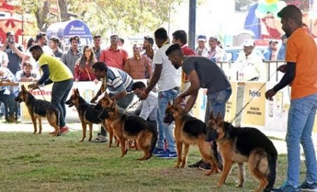 All India Championship Dog show in Bengaluru