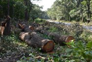 Rapacious projects imperil Western Ghats ecosystem
