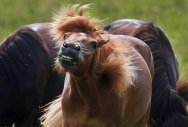 Horses can recognise human facial expressions: study