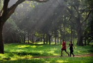 The team analysed how the health of people with little access to green spaces compared to that of people with the highest amounts of exposure. (DH File Photo)