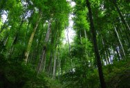 Forests key to achieving climate goals: Study