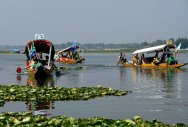 Dal Lake harbours bacteria that can degrade pesticides