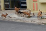 Two kids, on the way to school, attacked by dogs