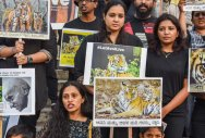 Bengalureans join campaign to save tigress Avni