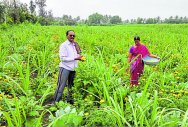 Diversity is key to success of this farmer couple