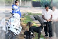 Dog lovers face MP's ire